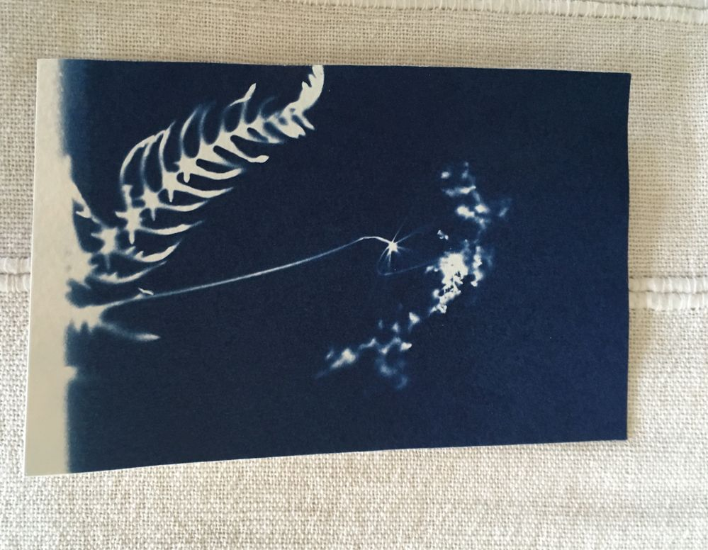 My cyanotype print from the art talk today