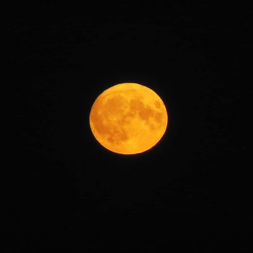Big harvest moon last night
