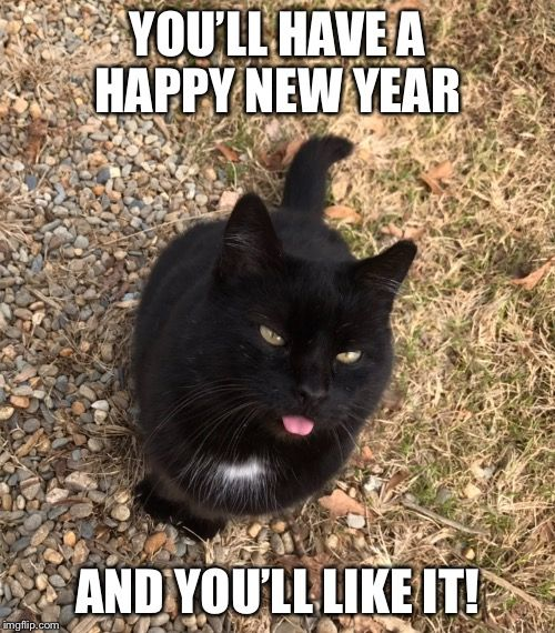 new year cat.jpg